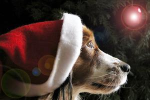 Χριστουγεννιάτικοι κίνδυνοι για τα κατοικίδια